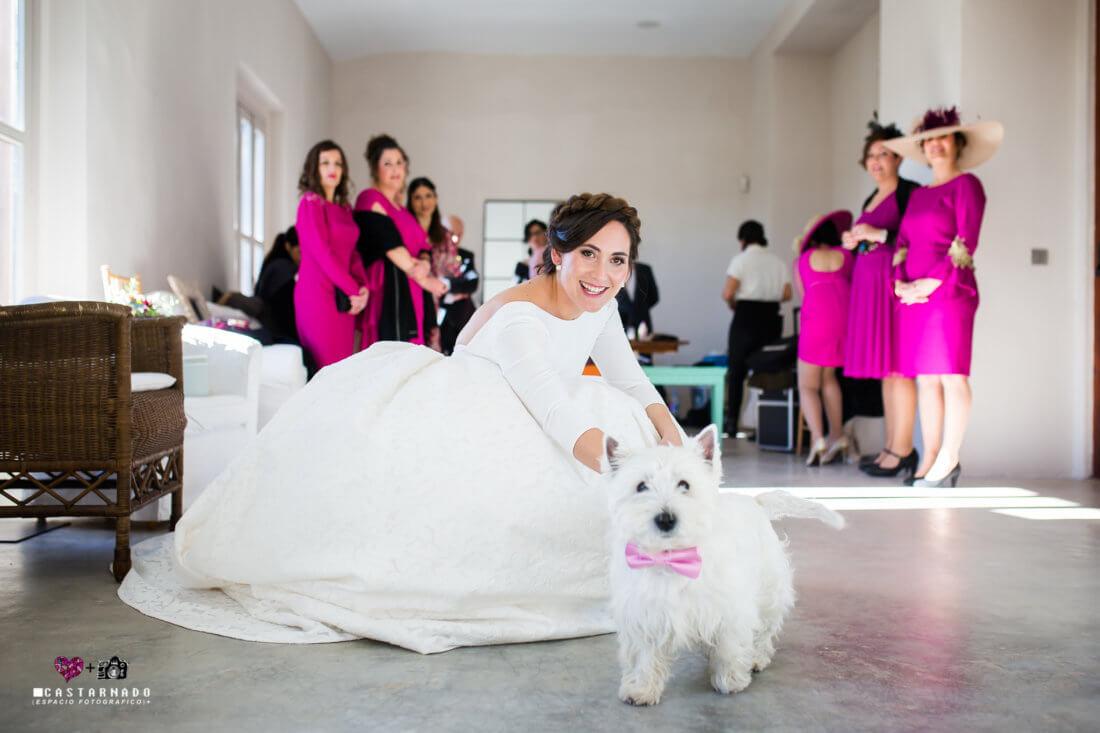 Mascotas en las ceremonias
